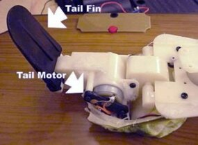 This electric motor moves the tail section in time to the music. Just like the motor operating the mouth, the tail motor causes the tail fin to move out away from the plaque and a spring makes the tail fin snap back when the motor stops.