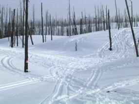 In February 2005, 17 snowmobilers were arrested for not only going off-trail in Yellowstone National Park, but also for using their snowmobiles to enter illegally.