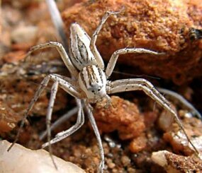 For most people, regular-sized spiders are scary enough.