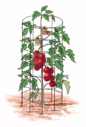 Tomato cages help support tomato plants as they grow.