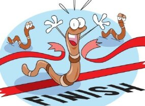 Watch to see which worm wins the race!