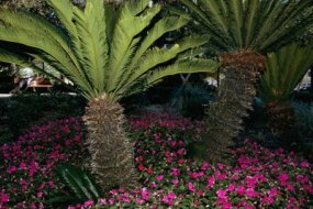 Pioneer Park in St. Petersburg, Fla. If properly maintained, a Xeriscaped landscape can look as nice as a regular lawn.