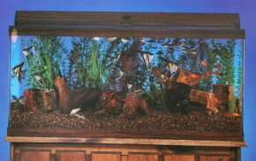 With the proper planning and preparation, keeping an aquarium can be a rewarding experience. See more aquarium pictures.