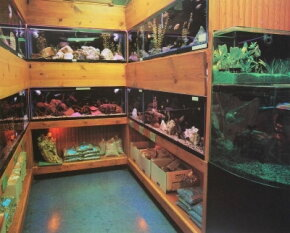 The choices for new fish are limitless, but take care before introducing a stranger into your aquarium community.