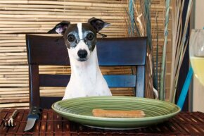 This dog brandishes a bit of self-control before he begins dining.