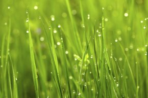Just admire the beauty of wet grass. Don't cut it.