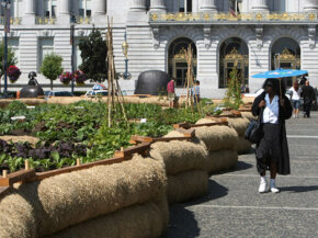 Organic food is great when it will be eaten locally -- the case for this San Francisco City Hall garden. But it isn't the environmentally friendly default many believe it to be.