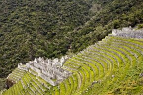 Incan farmers planted crops on the steep peaks of the Andes by using agricultural terraces like these seen at the ruins of Winay Wayna in Peru.