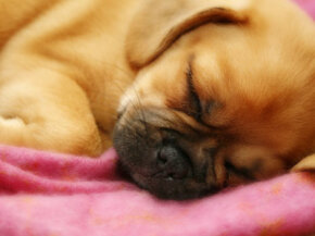 Getting your pet loaded on tranquilizers or sedatives could make the flight go by faster, but it can prove dangerous at times. Consult your vet about it.