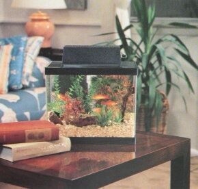 Smaller tanks such as this one can sit safely on a table or another piece of furniture.