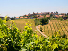 The wine you had at dinner last night could have easily started with grapes grown in a lovely vineyard like the one pictured here. See our collection of wine pictures.