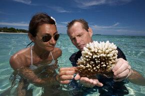 Marine biologists holding coral — Maldives
