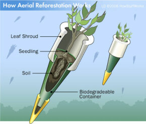 Seed canisters prevent seedlings from being damaged when dropped from a plane, yet decompose soon after to let the trees' roots emerge.