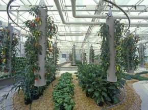Aeroponics on display (in the cylinders at left and right) at Epcot Center.