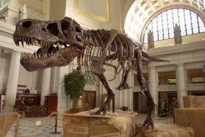 The 67-million-year-old Tyrannosaurus rex skeleton known as Sue