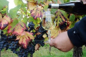 This Cahors white wine was made with the red grapes pictured, in Cahors, France.