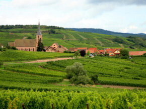 The route des vines in Alsace, France. See our collection of wine pictures.