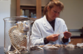 A bird skeleton sits in a jar at the U.S. Fish and Wildlife Service Forensics Laboratory as investigators examine evidence.