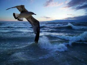 Seagulls are sensitive to barometric changes. It's thought that they return to land if they feel pressure drop.