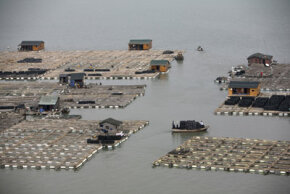 Chinese aquaculture facility
