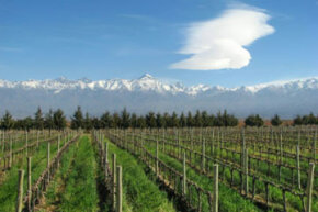 Argentina is among the top five wine producing regions (by volume of wine produced) in the world.