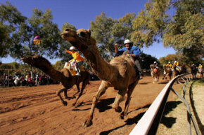 Camel racing is a rather unique Australian sporting tradition.