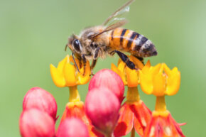 Bees may bug you, but they're essential to our environment.