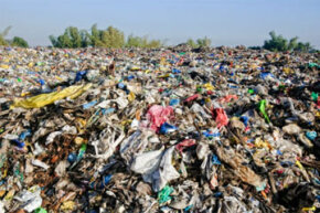 Should you just toss everything in the trash? See more green science pictures.