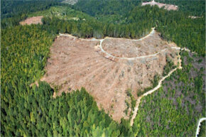 Practices like clear-cutting have helped to drastically amp up the extinction rate.