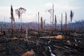 Slash and burn deforestation in the Amazon Basin circa June 2001. A decade later, Brazilian rates of deforestation have dropped sharply.