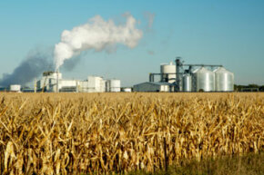 Ethanol production could cause the price of corn to rise, resulting in a ripple effect that ends with consumers paying more for corn.