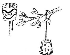 Remove the yogurt container and hang the suet bell from a tree. (Step 6)