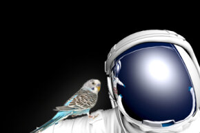 Birds would actually do quite well in space. See more astronaut pictures.