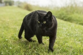 Black cats have a bad rap, but truthfully they're just as cute (and innocent) as other kitties.