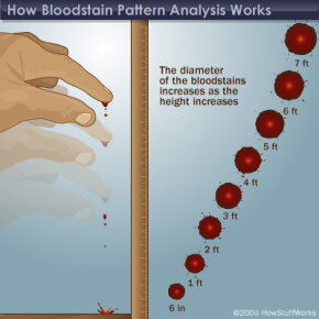 As height increases, so does the diameter of the blood drop