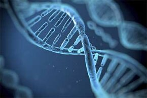 Unlike a cell's atoms and molecules which are constantly changing, the DNA remains the same from the day of a cell's birth.