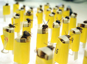 At Los Alamos National Laboratory, these bees are harnessed and ready to be trained.