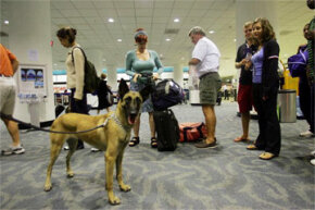 Bomb-sniffing dog in airport