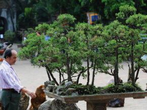 Your best bet to find a good bonsai tree is to visit a respectable nursery.