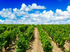 Bordeaux is one of the most important wine regions in France -- and the world. See our collection of wine pictures.