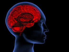 Brain Image Gallery Deja vu is the feeling that you have experienced a situation before even though you know you haven't. Learn about deja vu and theories behind deja vu. See more brain pictures.