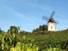 Would it surprise you to learn that each year, the Burgundy wine region produces more white wine than red wine? See our collection of wine pictures.