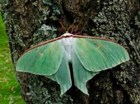 Is this winged creature a butterfly or a moth? See more insect pictures.
