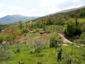 The Calabria wine region has been influenced by many different cultures. See our collection of wine pictures.