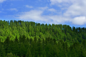 Not all forestry offsets are completely reliable.