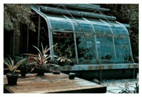 Greenhouses are great environments for growing bromeliads.