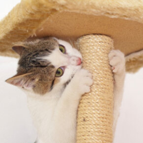 A scratching post provides a great outlet for playful cats to climb and sharpen their claws.