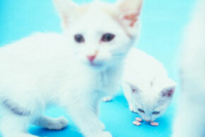 White cats with blue eyes, yellow eyes or one of each are more likely to be born deaf. See more cat pictures.