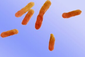 A close-up of Clostridium botulinum