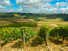 The Champagne region of France is one of the most heavily praised wine regions on Earth. See our collection of wine pictures.­